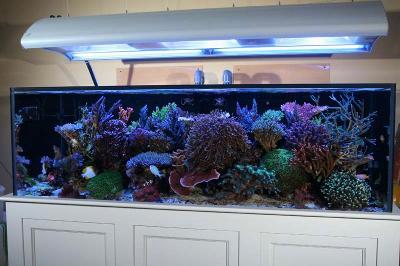 The Aquarium Store Indira Nagar Bangalore The Aquarium
